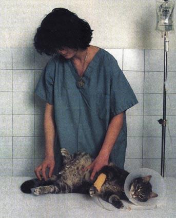 http://www.kitty.ru/Ill/Urino1.jpg