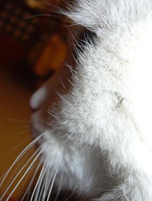 http://www.kitty.ru/Ill/tick_01.jpg