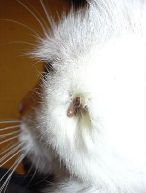 http://www.kitty.ru/Ill/tick_02.jpg