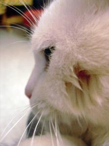 http://www.kitty.ru/Ill/tick_04.jpg
