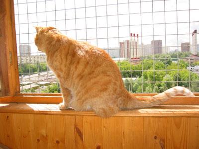 Балкон с натянутой сеткой.