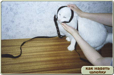 http://www.kitty.ru/Shleika/STEP02.JPG
