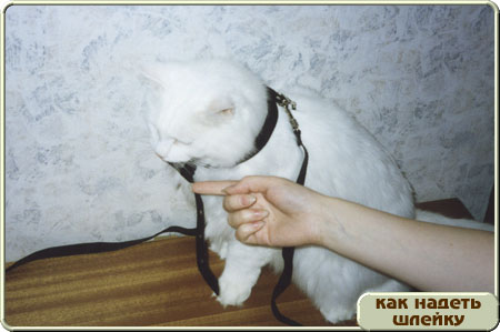 http://www.kitty.ru/Shleika/STEP03.JPG