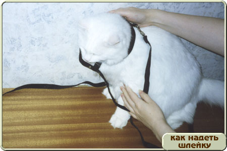 http://www.kitty.ru/Shleika/STEP04.JPG
