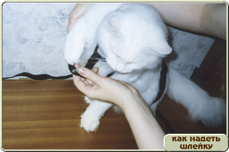 http://www.kitty.ru/Shleika/STEP05.JPG