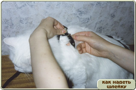 http://www.kitty.ru/Shleika/STEP07.JPG